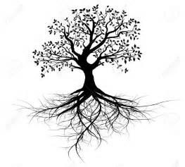 tree roots 4